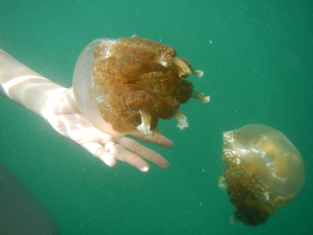 Jellyfish Lake – Kadidiri Paradise Resort & Dive Center