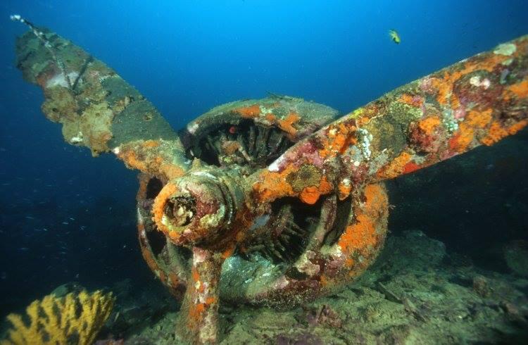 Bomber B-24 wreck